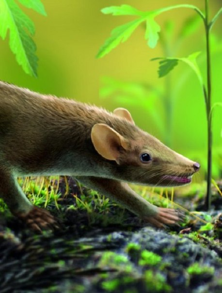 You imagine a shrew with thorns? Something similar lived in the territory of modern Spain more than 100 million years ago.