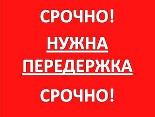 Уфа: Служба помощи в поиске пропавших животных