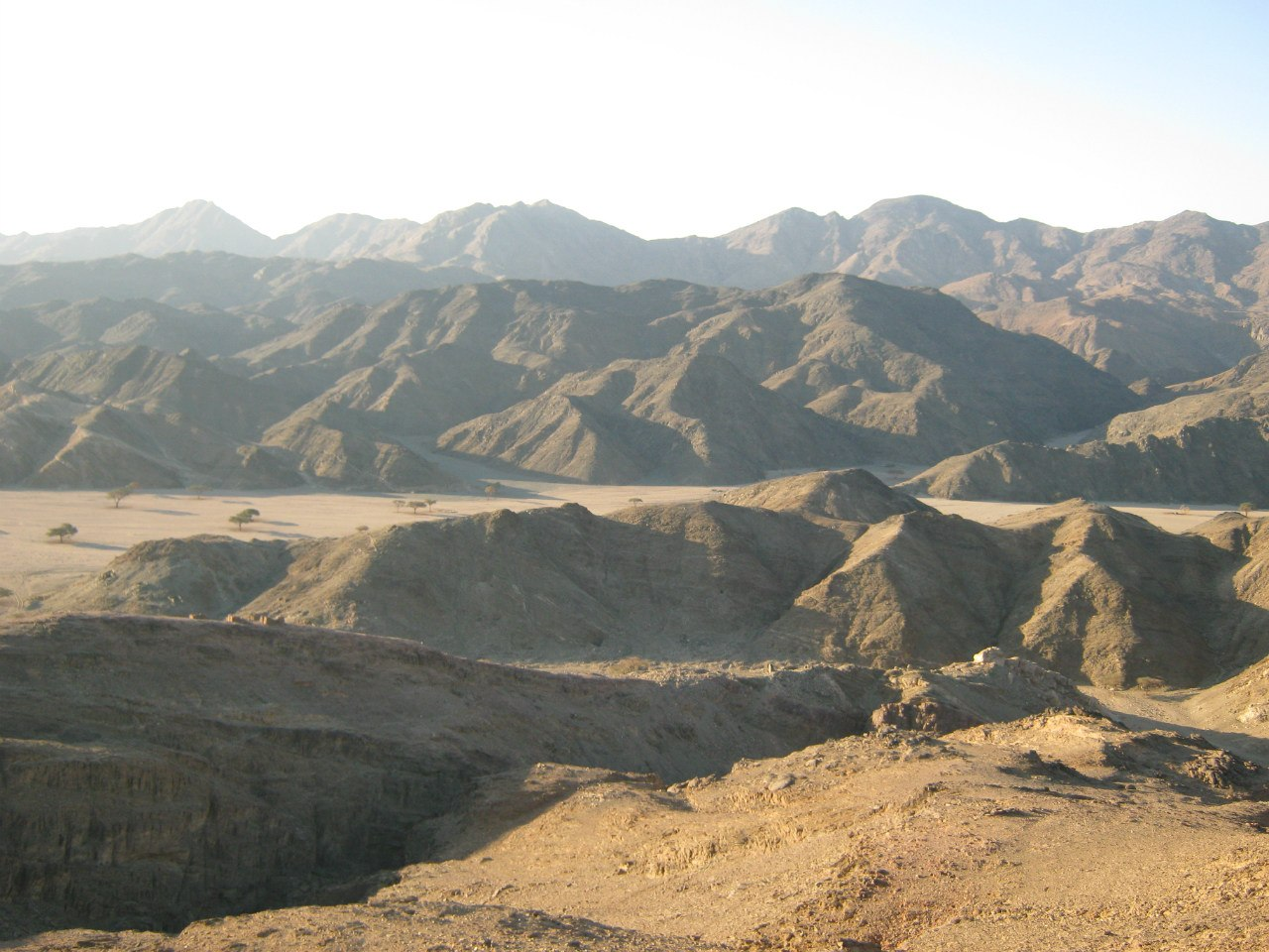 Редкие растения и деревья в пустыне