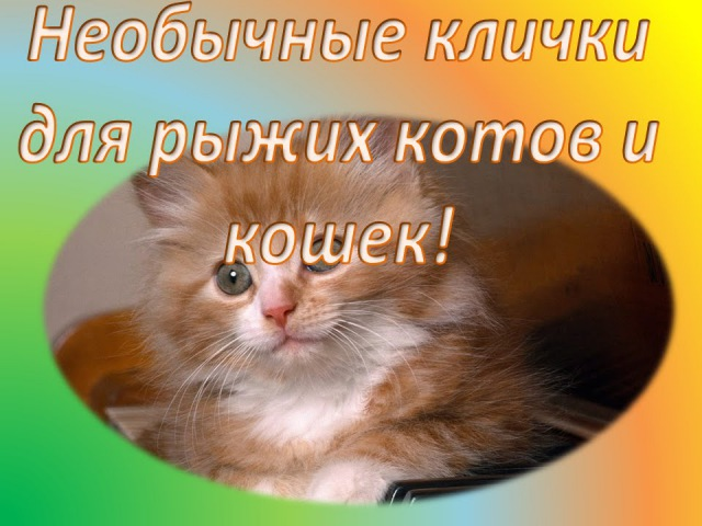 Необычные клички для рыжих котов и кошек! Много вариантов!
