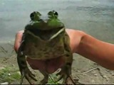 Amazing Frog screams out
