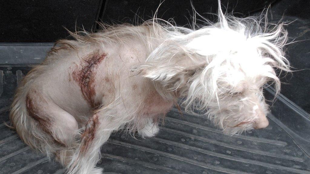 В Ростовской области ножом изрезали живую маленькую собаку