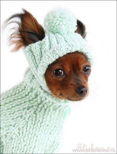 Вязание для собак (схемы,