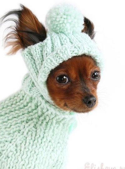 вязание для собак схемы описания вконтакте