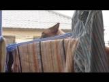 РЖАКА_ Неудачный паркур кота! [480p]