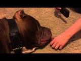 Did he really sleep through that LMAO!! THE HULK of ddkline what he is really like!