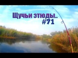 КР #71 - Щучьи этюды..