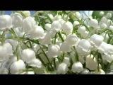 Светлана Малова, Цветочек белоснежный