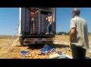 Россия щедрая душа 7 8 2015 Брянская обл уничтожение санкционных продуктов