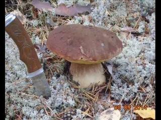 белые грибы ,пластиковая лодка Старт под плм ямаха 15