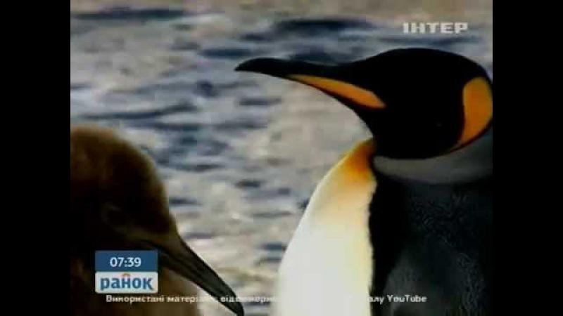 Подниматель пингвинов - одна из самых необычных вакансий в мире