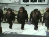 Арсен Петросов - КАЙФУЕМ !!! (клип-пародия)