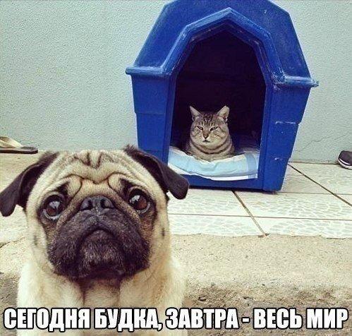 вот такие они..котЭ))