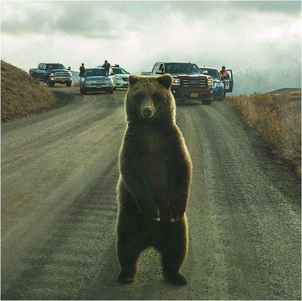 Наикрутейшее фото из Инстаграма National Geographic.