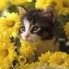 Кошки, кошки, кошки!
