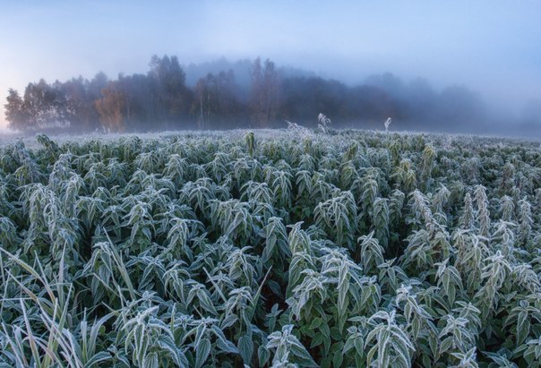 «Крапивное утро». Автор фото: Алексей Угальников