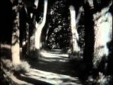 Там, где шумят Михайловские рощи. Фильм о жизни и творчестве А.С. Пушкина