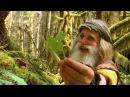 Легендарный дикий человек! Пень от дерева заменил этому мужчине дом, а шишки - зубную щетку.