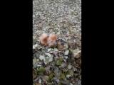 Твикс и листья:DDD