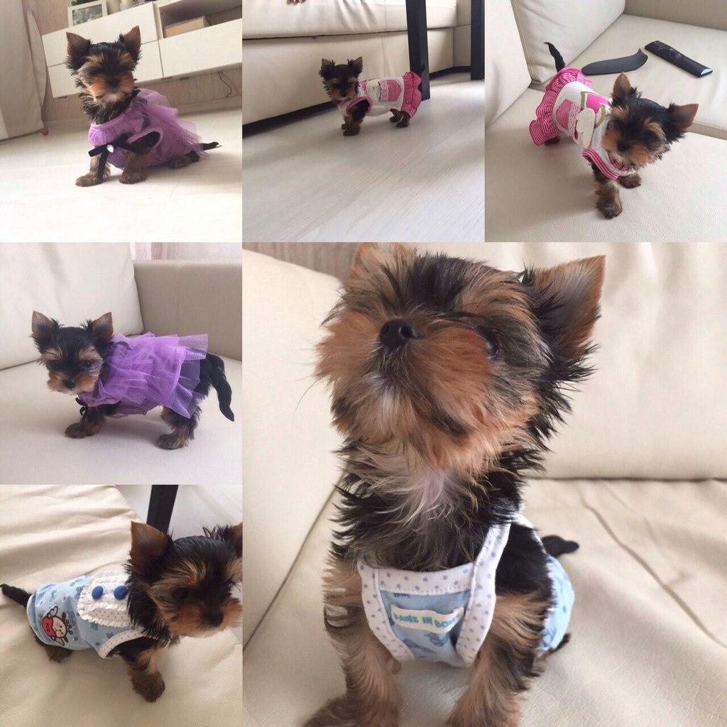 Интернет магазин одежды для собак YcSN2vUyB1k