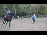 Ребенок выполняет аллюр галоп на лошади (ШВЕ