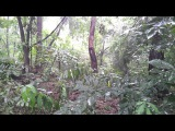 Relaxing Sounds of Rain And Thunder in Woods - The Sounds of Nature 16