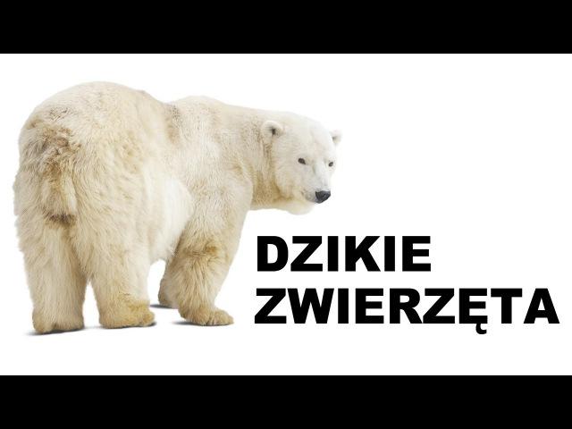 Польська для початківців - Дикі тварини 2 (Dzikie zwierzęta)