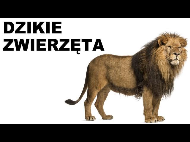 Польська для початківців - Дикі тварини 1 (Dzikie zwierzęta)