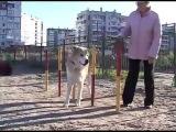 Домашние новости: Правильный выгул собак