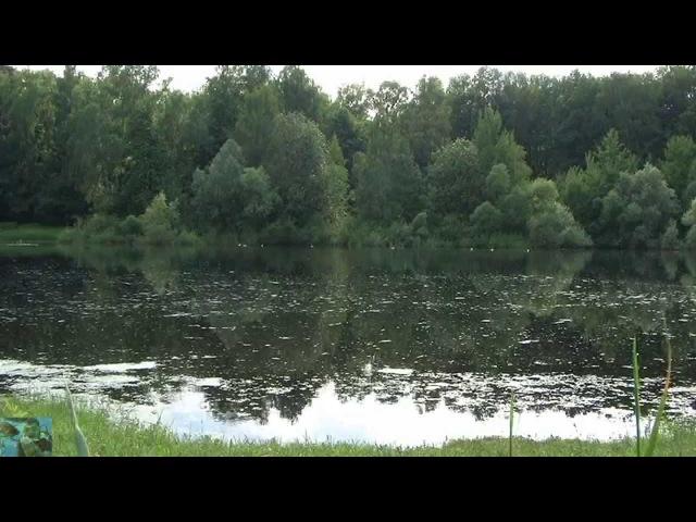 Звуки природы. Ольняный пруд. Лягушки