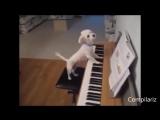 Самые смешные, улетные и прикольные животные Смешно до слез Очень смешные ролики #2