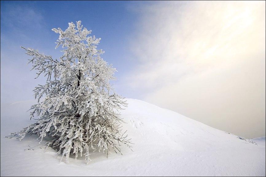 Зимняя ель на склоне