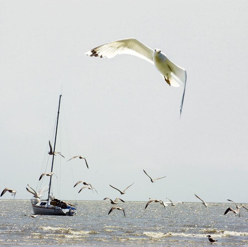 Донецкие чайки
