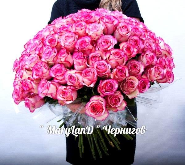 Машулик Бондаренко, Чернигов - фото №14
