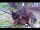 Кот извращенец