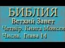 Библия.Ветхий завет.Четвёртая книга Моисея Числа.Глава 14.