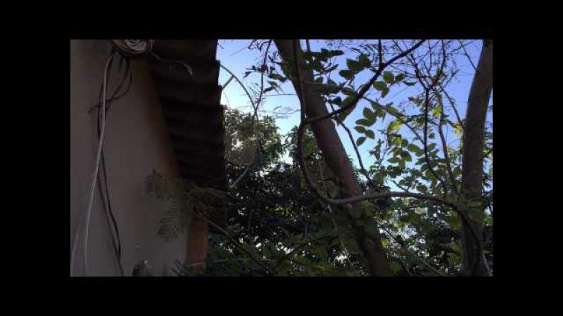 Canto Su Ave na Chácara Pau D'Óleo. Sobradinho, Distrito Federal - DF, Brasil. 16jun15