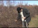 Зеленый сад фильм осенняя обрезка смородины