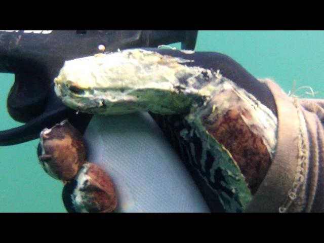 Pescasub.......richiamo forchetta... l ultimo.....