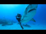 Ocean Ramsey dives with Sharks for Conservation. Water Inspired Music