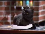 The Favorite Moments of Salem the Cat