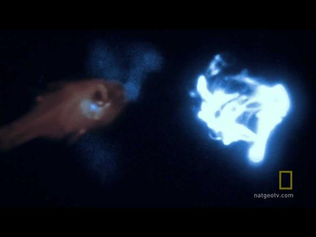 Bioluminescence on Camera | National Geographic