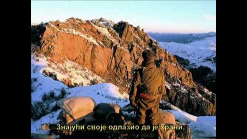 Змея Змија Владимир Мазур