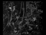 M, el vampiro de Düsseldorf -Fritz Lang, 1931.