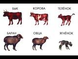 Животные и их детки. ПРОФЕССОР_КАРАПУЗ
