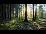 James Last - Вечерняя серенада (Франц Шуберт).wmv