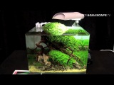 The Art of the Planted Aquarium 2015 - Scaper's Tank (Nano) category, part 1