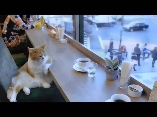 Кот в кафешке. Cat in cafe