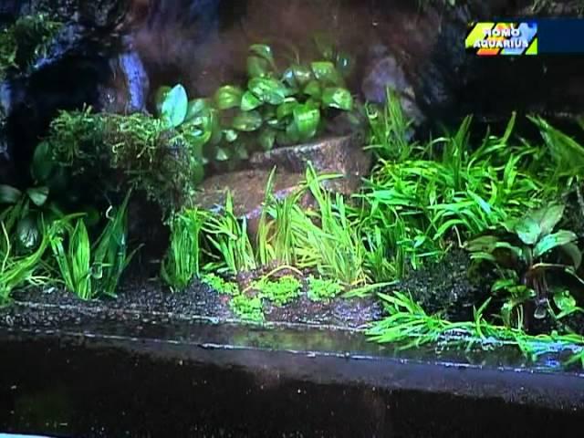 Природный аквариум Такеши Амано часть 2