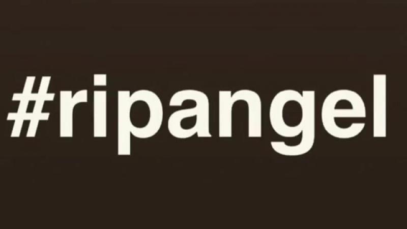 RipAngel, RipCat